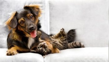 Puppy-And-Kitten-on-Couch